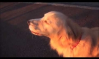 Šuo galvoja, kad jis greitoji pagalba