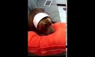 Šuo pričiumpamas su įkalčiais