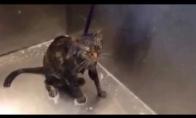 Katiniukas atsisako toliau praustis