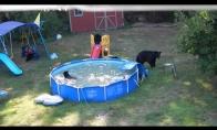 Meškiukų šeimyna užima šeimos baseiną