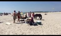 Arklys paplūdimyje ir akrobatas