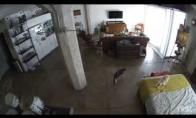 Katė užčiaupia įkyrų šunį