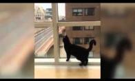 Katiniukas žaidžia su langų valytoju