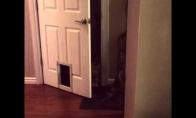 Beveik protingas katinas