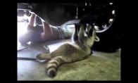 Pūkuotas mechanikas