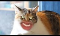 Jei katės turėtų žmonių burnas