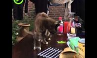 Katę išduria jos šeimininkai