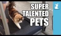 Talentingų gyvūnų rinkinys