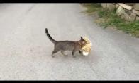 Katė vagia žaislus iš kaimynų