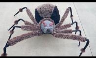 Didžiulis voras mirtinai gąsdina praeivius
