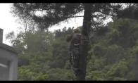 Kaip nereikia pjauti medžių