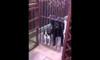 Labai mandagus šuo
