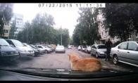Labai tingus katiniukas