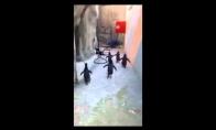 Madagaskaro pingvinų pabėgimas