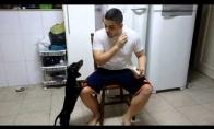Kaip apgaule priversti šunį išgerti vaistus