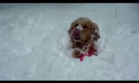 Pirma šunų pažintis su sniegu
