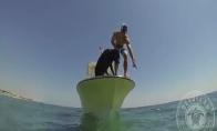 Šuo - žvejys