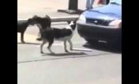 Pavojingas šuo