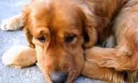 Šunelis pamato savo šeimininką po trijų metų pertraukos