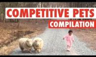 Konkuruojantys gyvvūnai