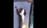 Katinas deginasi