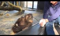 Beždžionė pamato magišką triuką