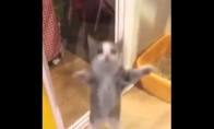 Reperio katinas