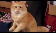 Katė, kuriai nepatiko Kalėdinė kepuraitė