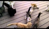 Kai kartą pašeri kaimynų katę