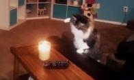 Katės prieš žvakes