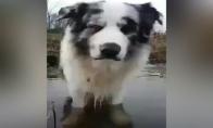Šunelis išmoksta leisti burbulus