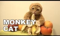 Katbeždžionė