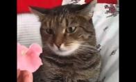 Gelytė prieš katę
