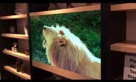 Permatomas Panasonic televizorius