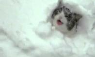 Vienintelis, kuris džiaugiasi sniegu