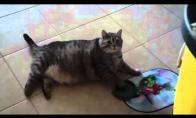 Alkanas katinopotamas