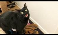 Katiniukai su garso efektais
