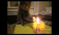 Velnio katinas