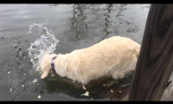 Šunelis - žvejys