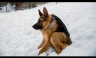 Keisčiausias šuo pasaulyje