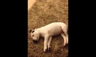 Šuo išsigąsta savo paties bezdalų