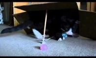 Kačių gaudyklė