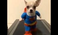 Super šuo