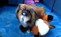 Šuniški žaisliukai