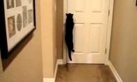 Protingas katinas