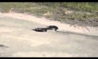 Depresuojanti gyvatė