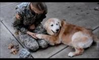 Šuns reakcija į šeimininkės grįžimą