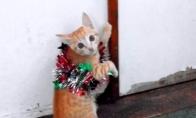 Kačiukas supainiojo Vėlykas su Kalėdom