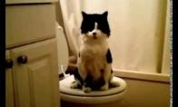 Kaip reikia auklėti katiną