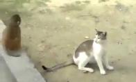 Tarzanas vs katinas